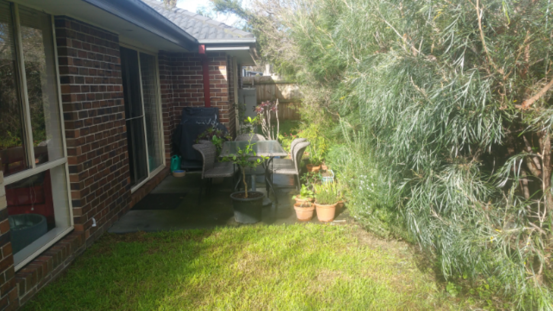 backyard (Medium)